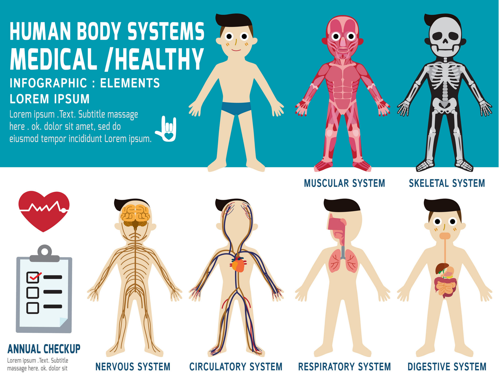 human body systems, annual checkup,anatomy body organ chart, muscular, skeletal, circulatory, nervous and digestive, vector flat icons design, health concept, illustration